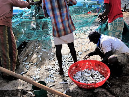 Poverty, Work, A Fishing Village, Fish, The Fisherman