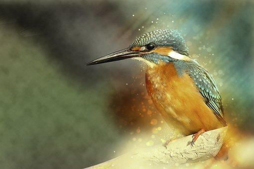 Animal, Avian, Beak, Bird, Bird Watching, Color