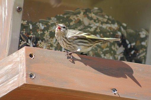 Bird, Nature, Outdoors, Animal, Wildlife, Bird Feeder