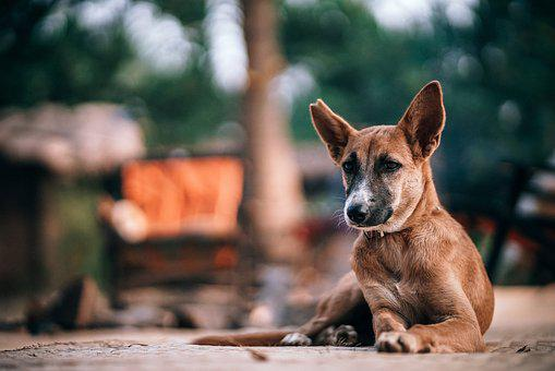 Alone, Animal, Beautiful, Breed, Brown, City, Canine