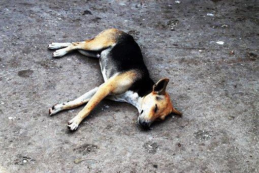 Dog, Sleeping, Animals, Nature, Way, And The Tramp