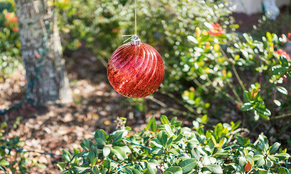 Crystal Ball, Nature, Leaf, Garden, Fruit, Tree