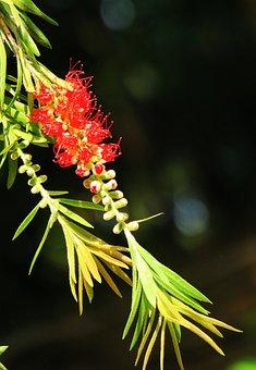 Nature, Leaf, Tree, Plant, Outdoor, Garden, Flower