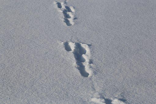Frost, No Person, Snow, Winter, Ice, Footprint, Track