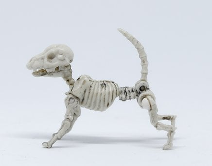 Show, Isolated, Figurine, Danger, Science, Animal