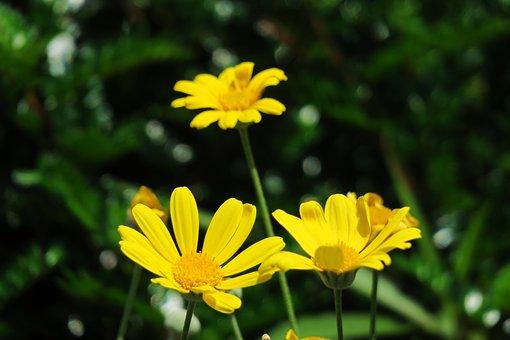Nature, Plant, Flower, Summer, Garden, Petal, Leaf
