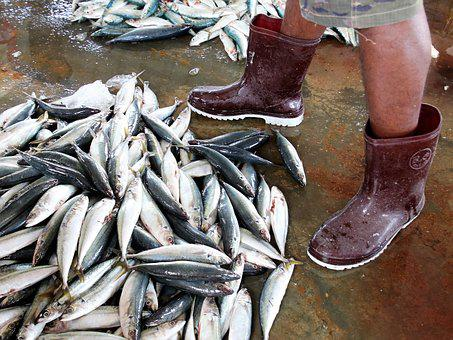 Rubber Boots, Wet, Legs, Seafood, Fish, The Fisherman