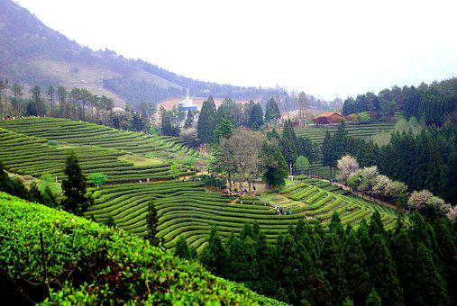 Valley, Hill, Mountain, Nature, Travel, Boseong