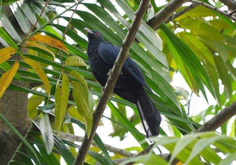 Nature, Tropical, Tree, Bird, Leaf, Rainforest