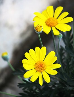 Nature, Plant, Flower, Summer, Petal, Flower's, Light
