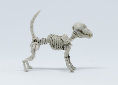 Animal, Nature, Wildlife, Little, Dog, Skeleton
