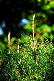 Outdoor, Nature, Tree, Plant, Wood, Leaf, Conifers