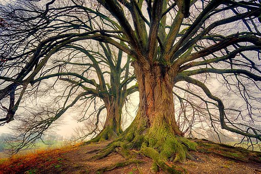 Tree, Nature, Wood, Landscape, Plant, Winter, Kahl, Log