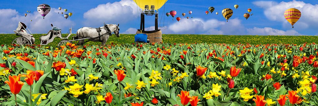 Nature, Landscape, Spring, Tulips, Flower Bed, Meadow