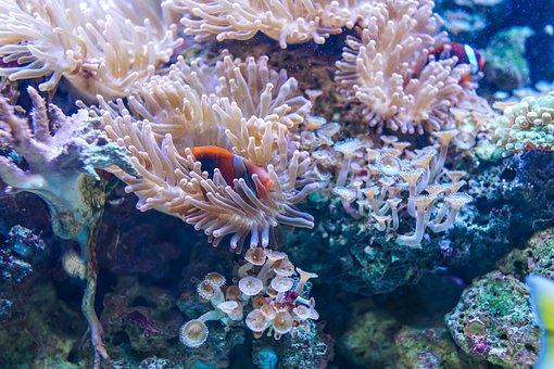 Underwater, Coral, Reef, Fish, Ocean