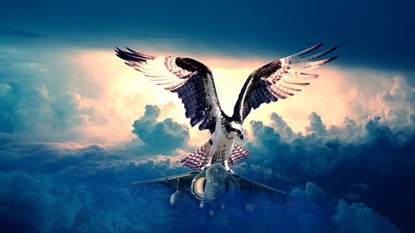 Nature, Sea, Sky, Ocean, Water, Jet Plane, Jet, Osprey
