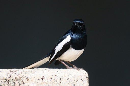 Nature, Bird, Wildlife, Outdoor, Animal, Cute, Wings