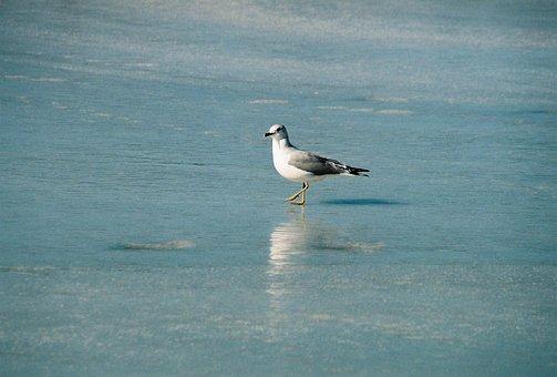Water, Bird, Sea, Nature, Outdoors, Seashore, Wildlife