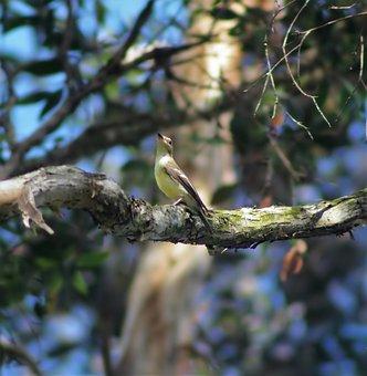 Tree, Nature, Bird, Outdoors, Wildlife, Wood, Wild