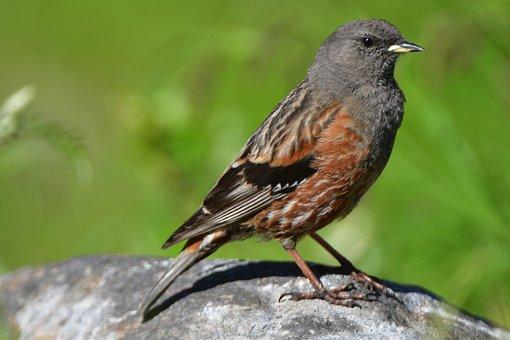 Natural, Bird, Wild Animals, Animal, Wings, Outdoors