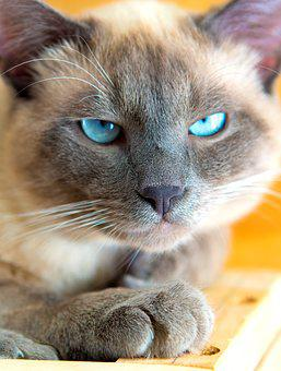 Cute, Animals, Little, Cat, Looking For, Young, Home