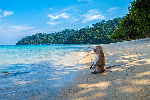 Monkey, Ape, Monkey Island, Island, Waters, Beach