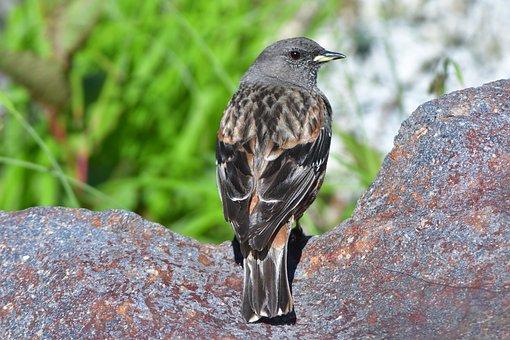 Natural, Wild Animals, Animal, Bird, Outdoors