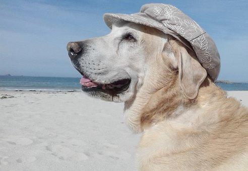 Beach, Sea, Dog, Animal, Body Of Water, Nature, Sand