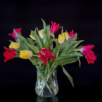 Still Life, Bouquet, Tulips, Red Yellow, Glass Vase