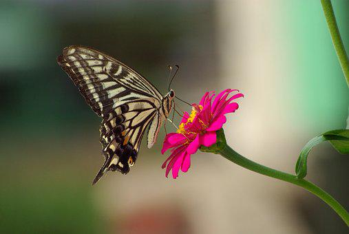 Butterfly, Nature, Flowers, Insects, Outdoors