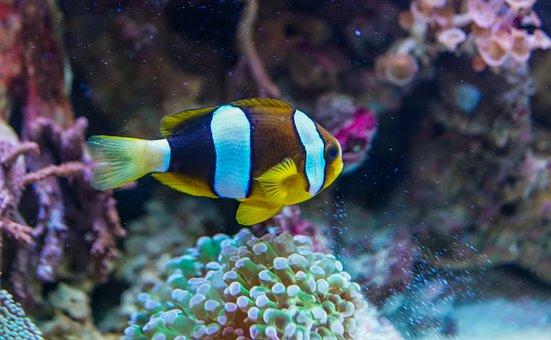 Underwater, Coral, Fish, Tropical, Reef