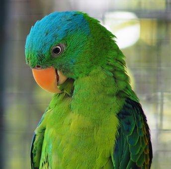 Parrot, Bird, Tropical, Feather, Animal, Parakeet