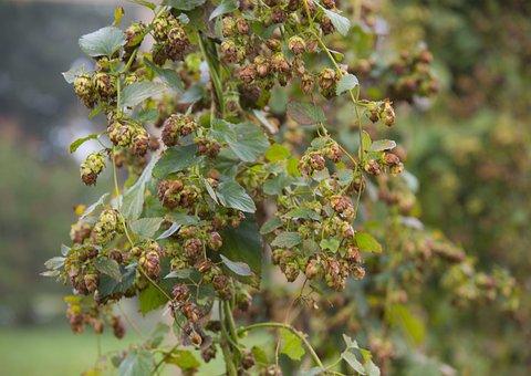 Leaf, Flora, Food, Nature, Grow, Flower, Agriculture