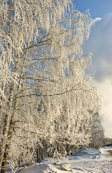 Nature, Winter, Tree, Leann, Snow, Coldly, Landscape