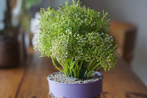 Flora, Food, Aromatic, Pot, Spice, Leaf, Freshness