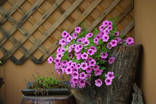 Flowers, Plants, Nature, Potted Plant, Home, Interior