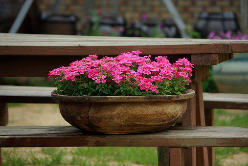 Flowers, Garden, Plants, Nature, Beautiful