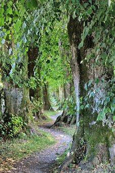 Nature, Leaf, Plant, Tree, Wood, Landscape, Summer