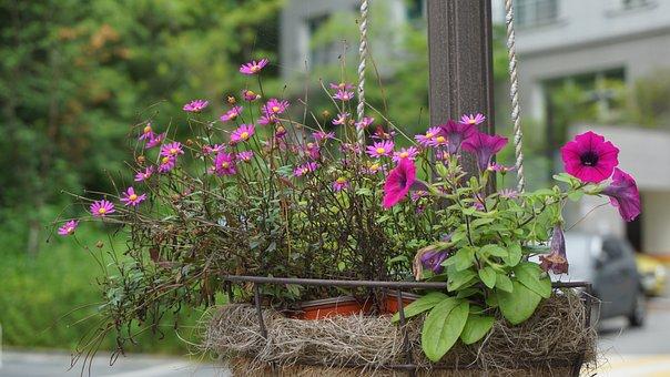 Flowers, Nature, Plants, Garden, Summer, Beautiful