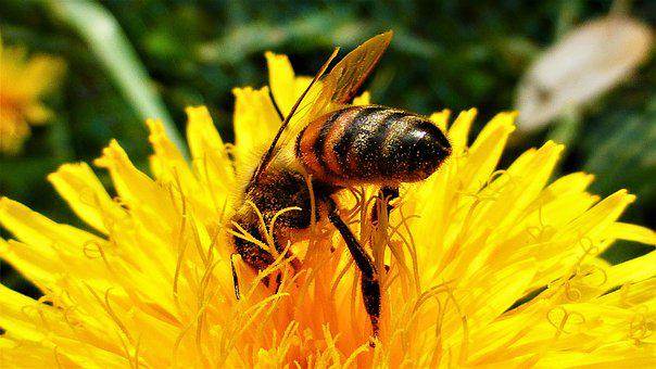 Nature, Insect, Flower, Bee, Plant, Pollination, Pollen