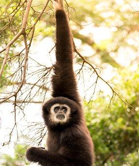Monkey, Primate, Ape, Wildlife, Mammal, Baboon, Nature
