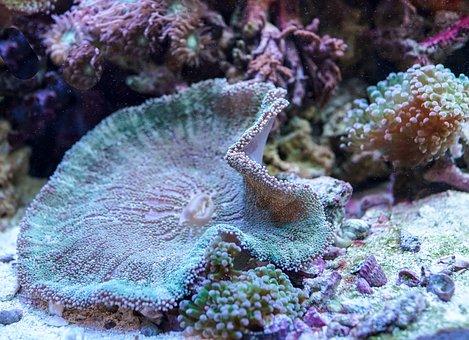 Underwater, Coral, Reef, Ocean, Sea, Scuba