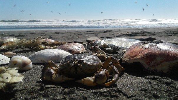 Nature, Water, Sea, Outdoors, Rock, Ocean, Beach, Sand