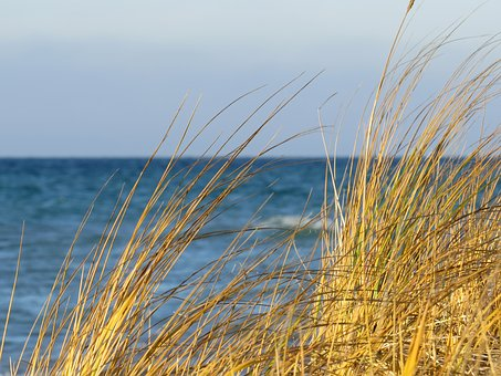 Nature, Summer, Sky, Grass, Fair Weather, Lake Michigan