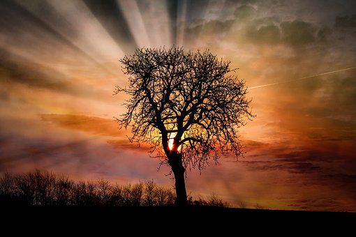 Dawn, Sunset, Tree, Sun, Landscape, Nature, Sky, Dusk