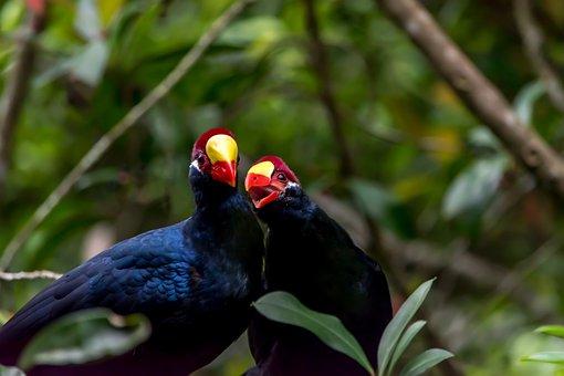 Bird, Nature, Wildlife, Tree, Outdoors, Tropical, Leaf