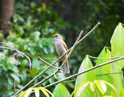 Bird, Nature, Wildlife, Tree, Animal, Wild, Outdoors