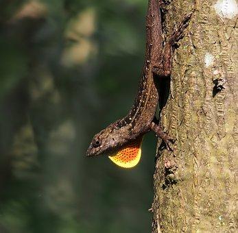 Nature, Reptile, Wood, Wildlife, Tree, Lizard, Animal