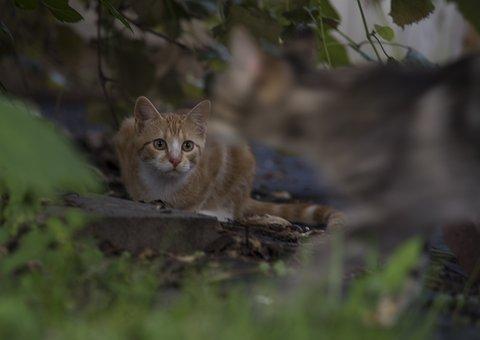 Nature, Animal, Outdoors, Wildlife, Wood, Cat, Mammal
