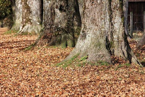 Wood, Tree, Nature, Leaf, Season, Plant, Park, Autumn